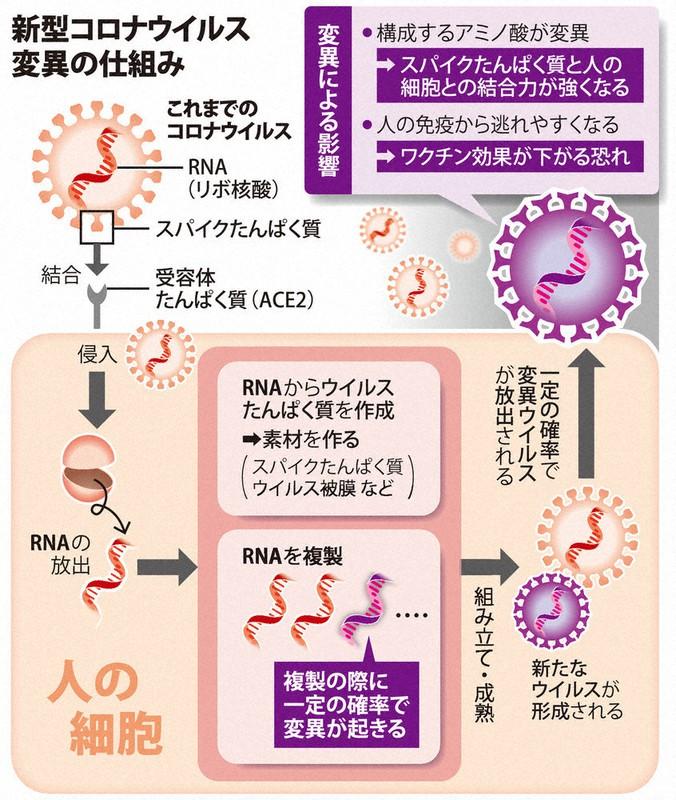 新型コロナウイルス 感染確率