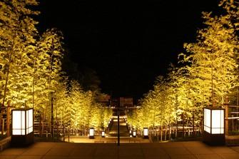 幻想的にライトアップされた長門湯本温泉の「竹林の階段」=山口県長門市提供
