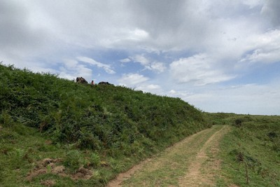 フランス国内のシダ植物が生い茂る散策路。ハイキングや乗馬トレッキングを楽しむ人たちが通っていく=筆者撮影