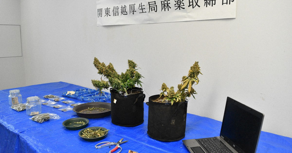 Japão criminalizará o consumo de cannabis, mas permitirá o uso de maconha medicinal