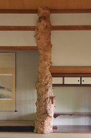 An alcove post made of mono maple wood is seen in the large hall of the former Japanese-style restaurant Kaneyu in Noshiro, Akita Prefecture, on May 26, 2021. (Mainichi/Akihiro Ogomori)