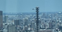 This image from video shows a U.S. Army Black Hawk helicopter flying within the JR Yamanote Line loop in central Tokyo on Aug. 11, 2020. The helicopter flew behind the Ministry of Defense's 220-meter-tall antenna tower. (Mainichi/Hiroyuki Oba)