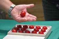 A box of Aomori Heartbeat cherries that fetched 450,000 yen (about $4,000) is seen at the central wholesale market in Hachinohe, Aomori Prefecture, on June 29, 2021. (Mainichi/Yushi Ezawa)