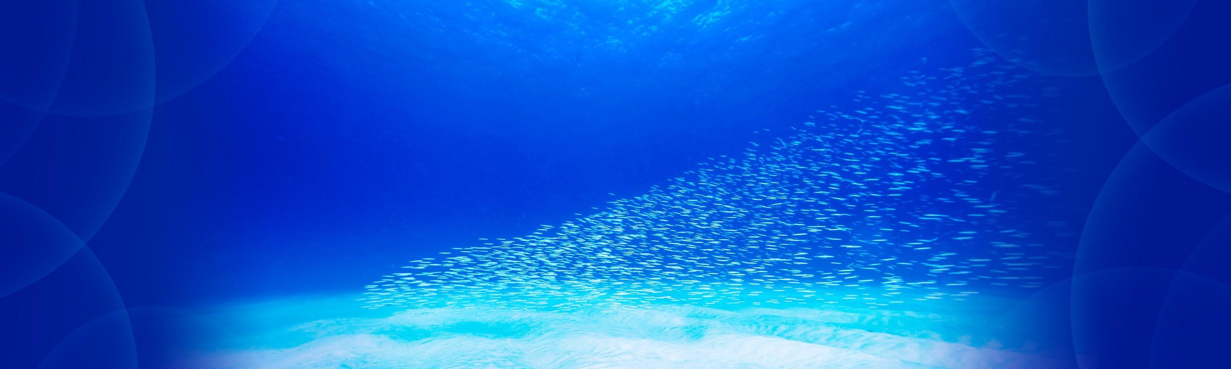 連載 水中写真連載 So Blue