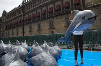 In this July 8, 2017 file photo, a young woman with the World Wildlife Fund carries a papier mache replica of the critically endangered porpoise known as the vaquita marina, during an event in front of the National Palace in Mexico City. (AP Photo/Rebecca Blackwell)