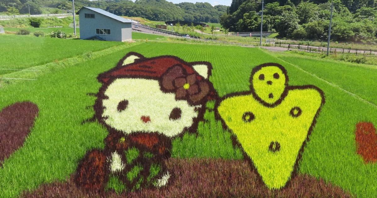 Campos de arroz atingem o pico de beleza no norte do Japão