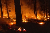 A firefighter uses a drip torch to ignite vegetation while trying to stop the Dixie Fire from spreading in Lassen National Forest, Calif., on July 26, 2021. (AP Photo/Noah Berger)