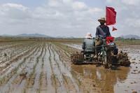 In this May 25, 2021 file photo, farmers plant rice at the Namsa Co-op Farm of Rangnang District in Pyongyang, North Korea. (AP Photo/Jon Chol Jin)