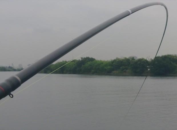 合わせがバッチリ決まって黒鯛を掛けた(多摩川河口で)