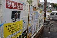 A sign on a bulletin board at a community center in Kitakyushu's Wakamatsu Ward warns people of monkeys, in this photo taken on Sept. 13, 2021. (Mainichi/Emi Aoki)