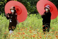 People wearing face masks to protect against the spread of the coronavirus enjoy the field of cosmos flowers at the Hamarikyu Gardens in Tokyo, Tuesday, Sept. 21, 2021. (AP Photo/Koji Sasahara)