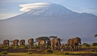 In this Dec. 17, 2012 file photo, a herd of adult and baby elephants walks in the dawn light as the highest mountain in Africa, Mount Kilimanjaro in Tanzania, sits topped with snow in the background, seen from Amboseli National Park in southern Kenya. (AP Photo/Ben Curtis)
