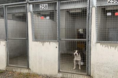 フランスの動物愛護団体に保護された犬。見学者の気配がすると駆け寄って様子をうかがう=筆者撮影